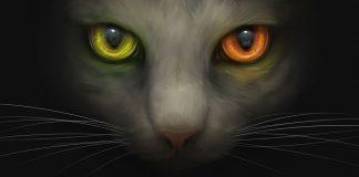 o príncipe gato