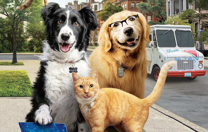 como-cães-e-gatos-3-peludos-unidos